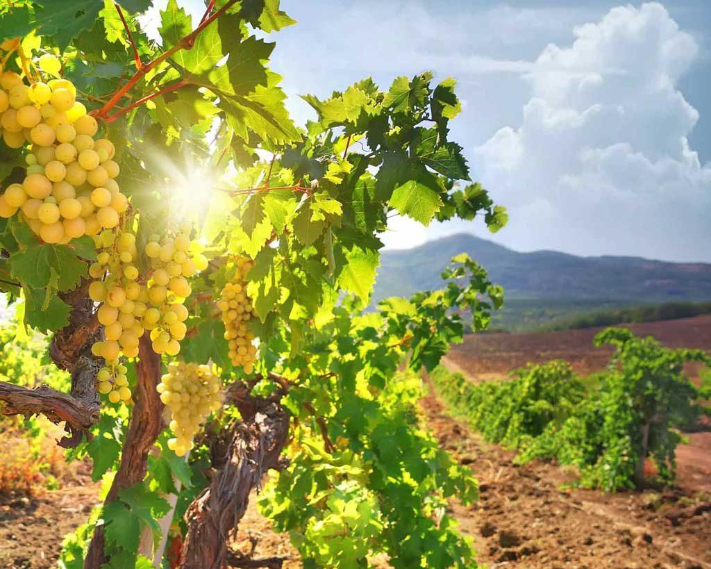 Сельское хозяйство на Кипре